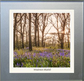 Photographic Glass Coaster - Windermere Bluebells
